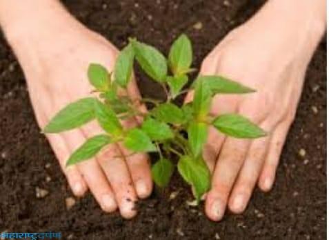 पाणी व प्राणवायु करिता आता तरी वृक्षारोपण आणि वृक्षा संवर्धन करूया
